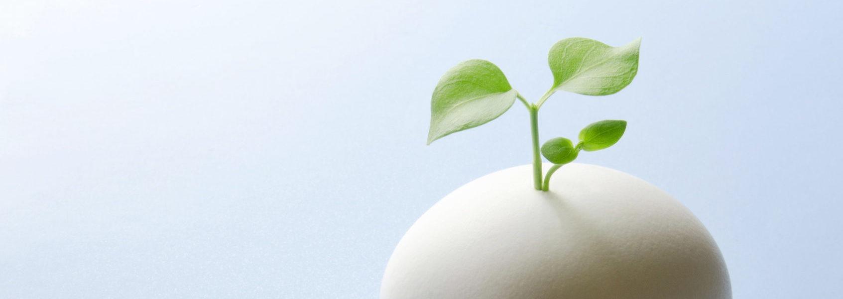 「小規模事業者持続化補助金」申請サポート